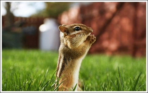 4A-Wish-for-Cute-and-Adorable-Animals18__605
